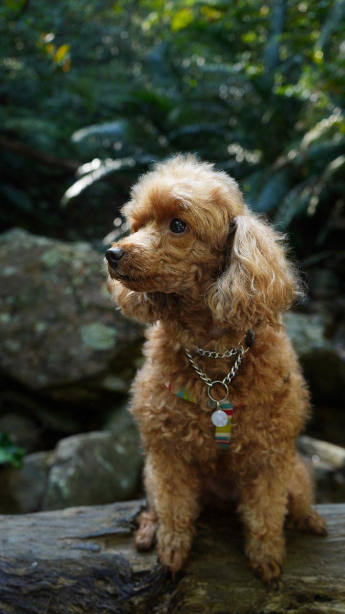 沖縄の写真 家族愛犬ティナちゃん