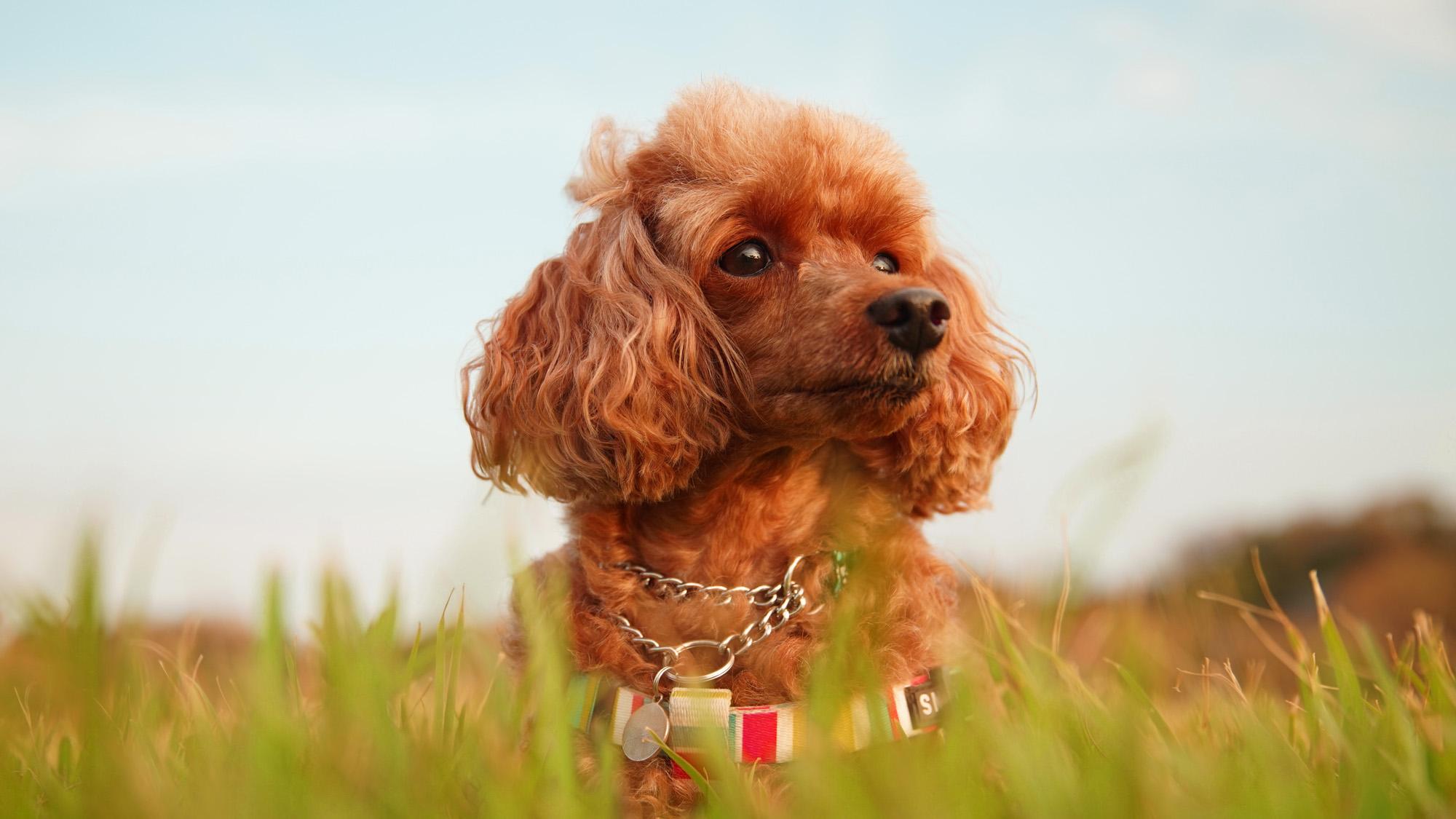 愛犬ティナちゃんの写真