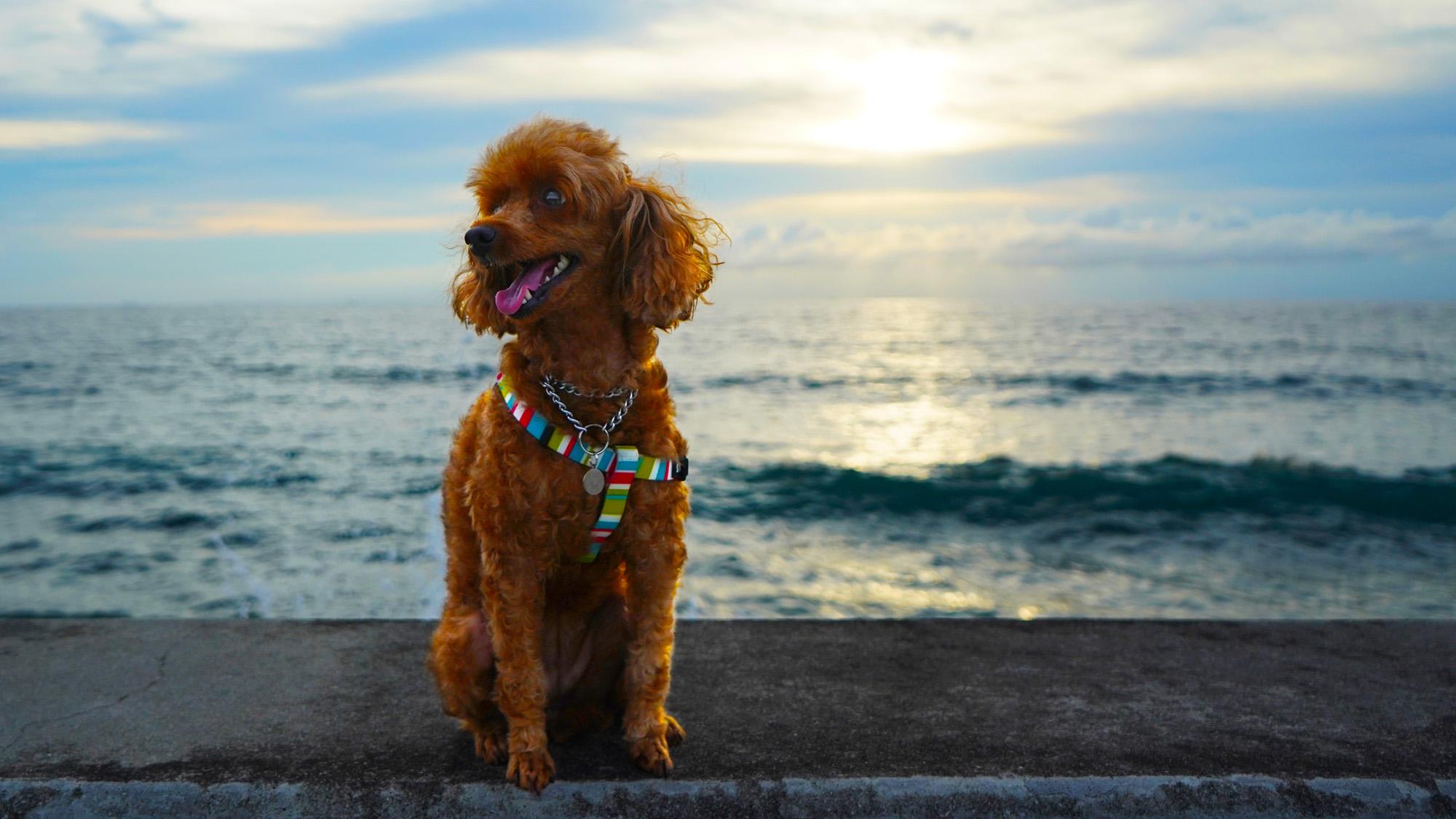ティナちゃんと砂辺で散歩
