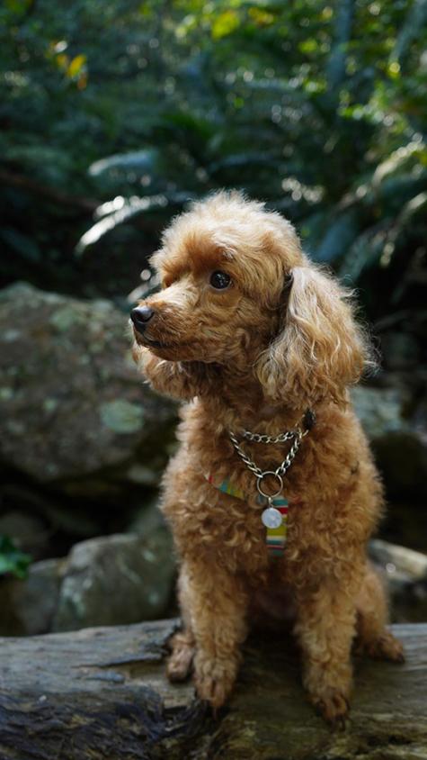 愛犬のティナちゃん